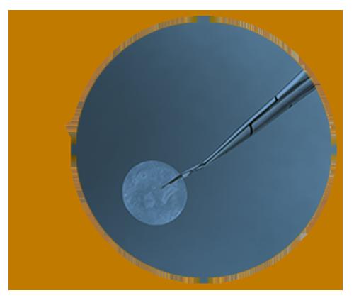 Triad Life Sciences: Clarity Amniotic Membrane